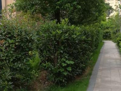 海天翡翠城 联排别墅 毛坯 可随意装修 带花园 带汽车库 小区附近设施齐全